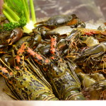 The Amazing Mediterranean Seafood Festival - Sheraton Grand